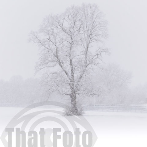 Snow Tree of Doncaster 2021