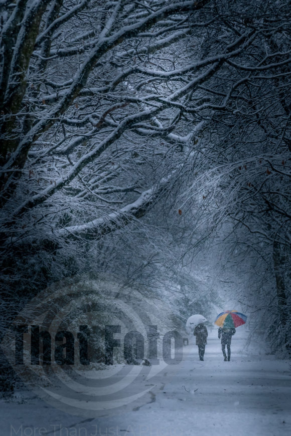 Winter walk in the snow at Sandall Beat woods Print